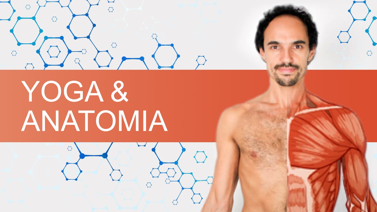 Yoga Anatomia e Consciência Corporal